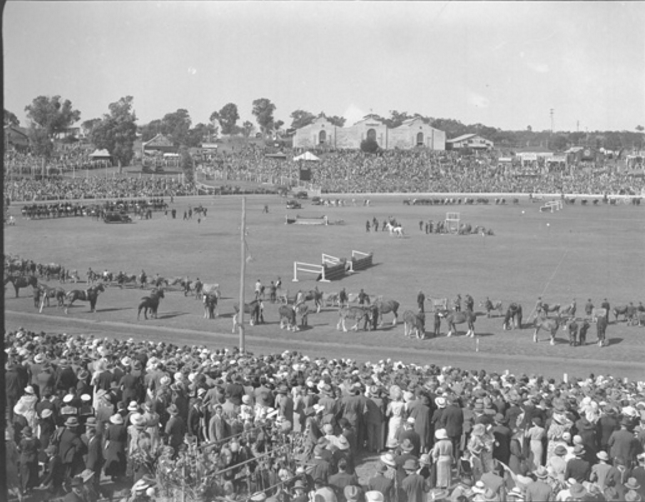 380 Messenger Horse parade Perth Royal Show 1934